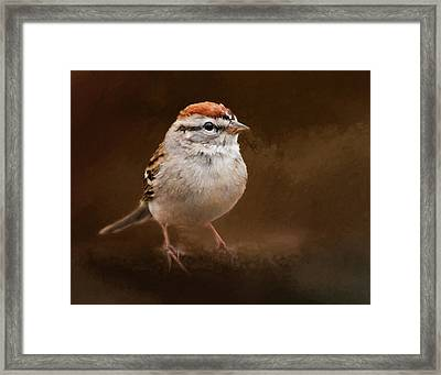 Portrait Of A Chipping Sparrow Framed Print