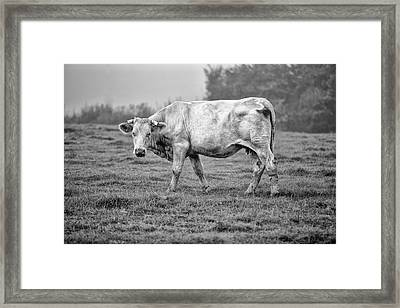 Portrait Of A Cow Framed Print by Nailia Schwarz