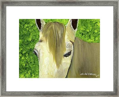 Portrait Of A Curious Horse Framed Print by Maria Williams