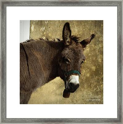 Portrait Of A Donkey Framed Print by Lainie Wrightson