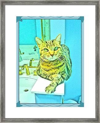 Portrait Of A Feline Framed Print