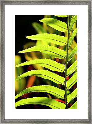 Portrait Of A Fern Framed Print