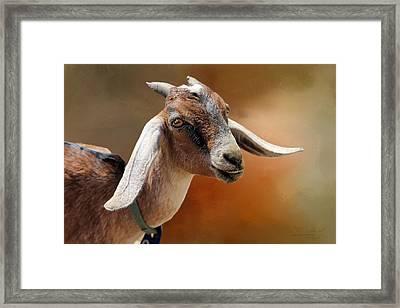 Portrait Of A Goat Framed Print