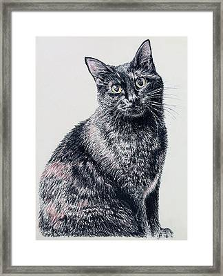 Portrait Of A Good Looking Cat Framed Print by Glenn Boyles