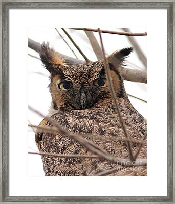 Portrait Of A Great Horned Owl Framed Print by Wingsdomain Art and Photography