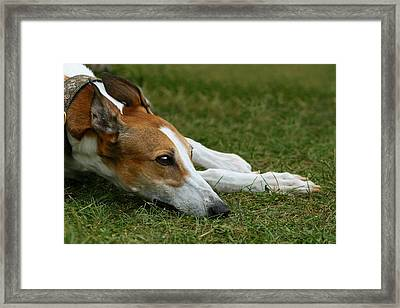 Portrait Of A Greyhound - Soulful Framed Print by Angela Rath