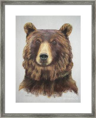 Portrait Of A Grizzly Bear Framed Print