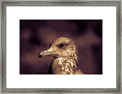 Portrait Of A Gull Framed Print