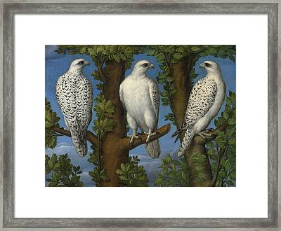 Portrait Of A Gyrfalcon Viewed From Three Sides Framed Print