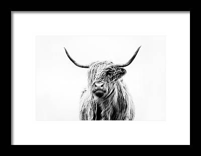 Scottish Highlands Framed Prints