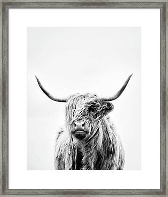 Portrait Of A Highland Cow - Vertical Orientation Framed Print