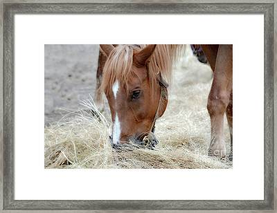 Portrait Of A Horse Framed Print by Brenda Bostic