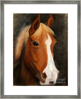 Portrait Of A Horse Framed Print by Jasna Dragun
