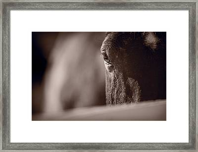 Portrait Of A Horse Kentucky Framed Print