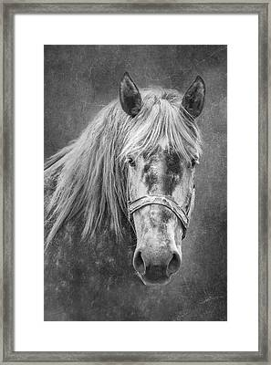 Portrait Of A Horse Framed Print by Tom Mc Nemar