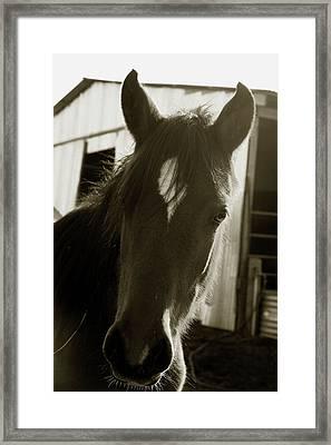 Portrait Of A Horse Framed Print by Toni Hopper