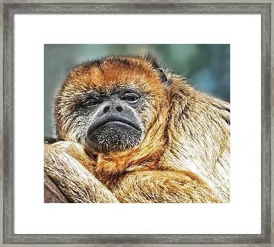 Portrait Of A Howler Monkey Framed Print by Jim Fitzpatrick