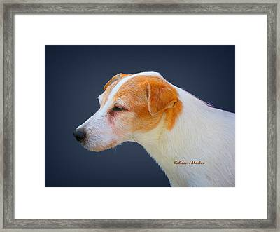 Portrait Of A Jack Russel Framed Print