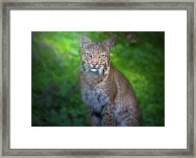 Portrait Of A Lady Framed Print by Mark Andrew Thomas