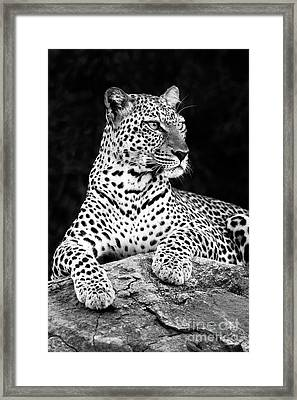 Portrait Of A Leopard Framed Print by Richard Garvey-Williams