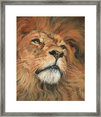 Framed Print featuring the painting Portrait Of A Lion by David Stribbling