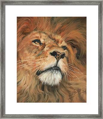 Portrait Of A Lion Framed Print by David Stribbling
