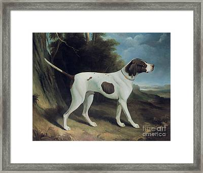 Portrait Of A Liver And White Pointer Framed Print
