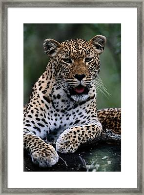 Portrait Of A Male Ten-month-old Framed Print by Chris Johns