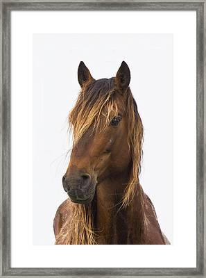 Portrait Of A Mustang Framed Print