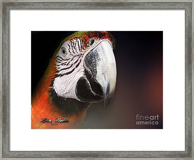 Portrait Of A Parrot Framed Print by Melissa Messick