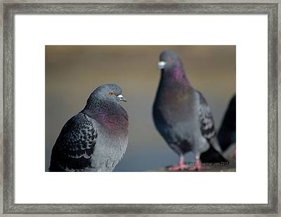 Framed Print featuring the photograph Portrait Of A Pigeon by Lora Lee Chapman