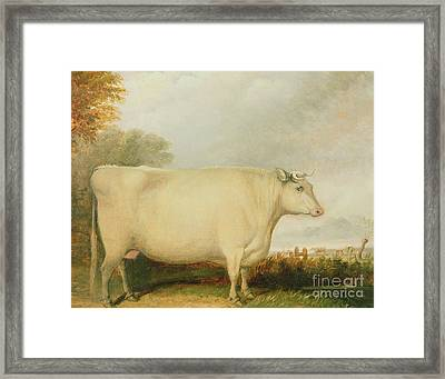 Portrait Of A Prize Cow Framed Print by John Vine