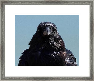 Portrait Of A Raven Framed Print by Wingsdomain Art and Photography