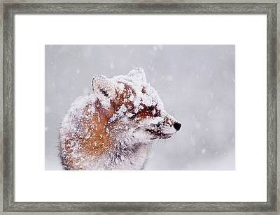 Portrait Of A Red Fox In A Blizzard Framed Print by Roeselien Raimond