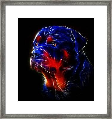 Portrait Of Rottweiler Framed Print by Alexey Bazhan
