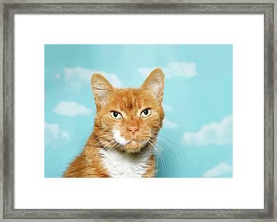 Portrait Of A Senior Tabby Cat Framed Print by Sheila Fitzgerald