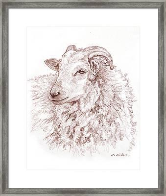 Portrait Of A Sheep Framed Print