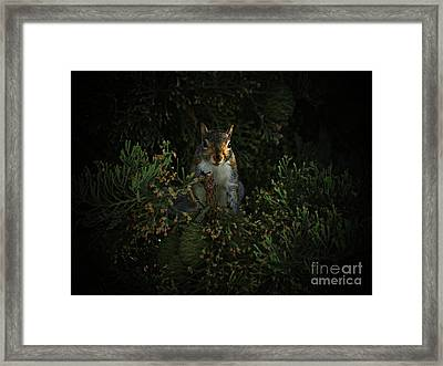 Portrait Of A Squirrel Framed Print