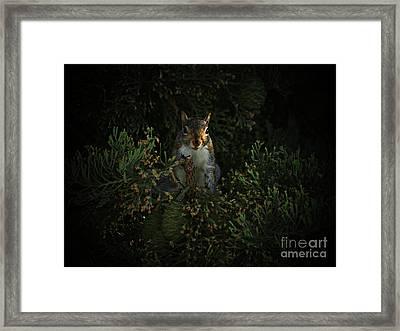 Portrait Of A Squirrel Framed Print