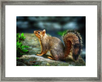 Portrait Of A Squirrell Framed Print