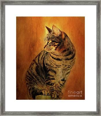 Portrait Of A Tabby Cat Framed Print by KaFra Art