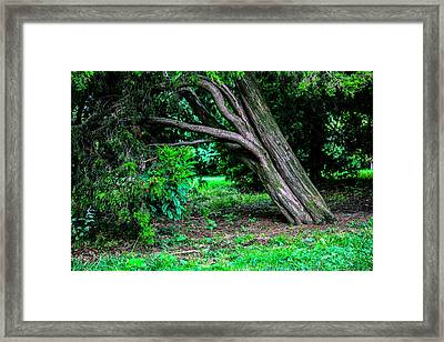 Portrait Of A Tree Framed Print