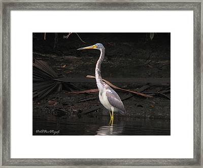 Framed Print featuring the photograph Portrait Of A Tri-colored Heron by Barbara Bowen