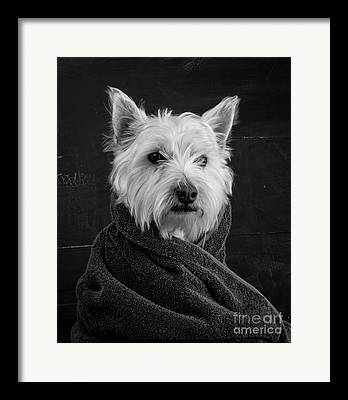 White Dog Framed Prints