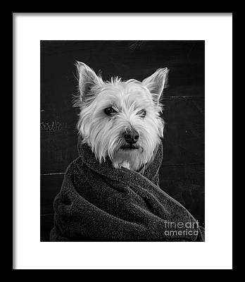 Breeds Framed Prints