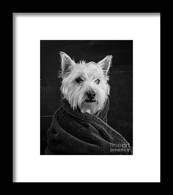 Canine Framed Prints