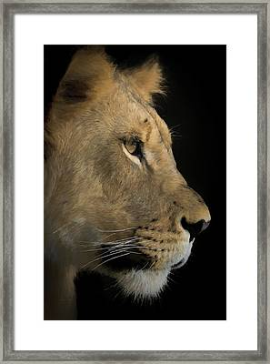 Framed Print featuring the digital art Portrait Of A Young Lion by Ernie Echols