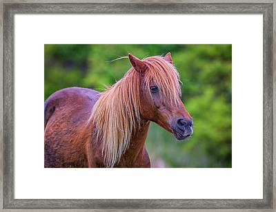 Portrait Of An Assateague Pony Framed Print by Rick Berk