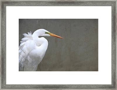 Portrait Of An Egret Rectangle Framed Print