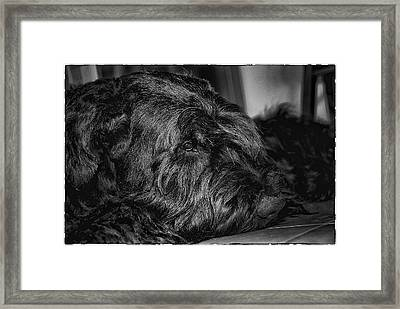 Portrait Of Black Dog Framed Print by Andrei SKY